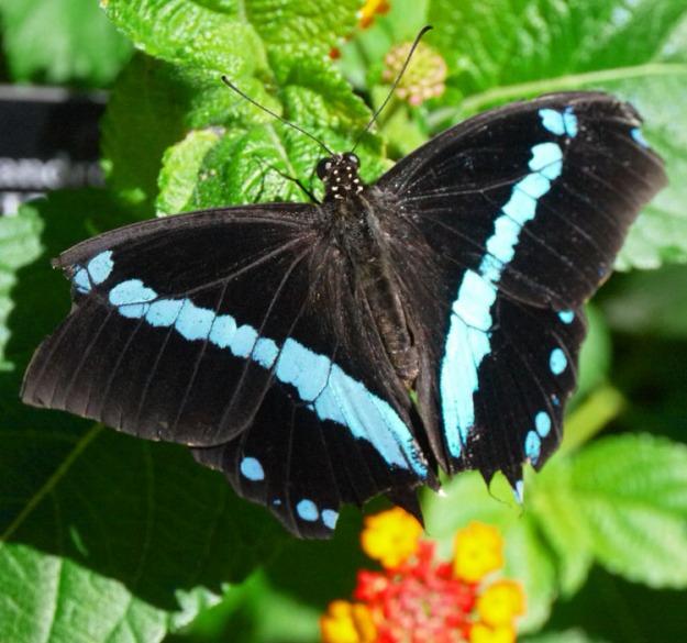 blooms butterflies 871