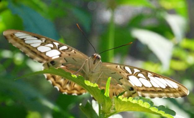 blooms butterflies 873