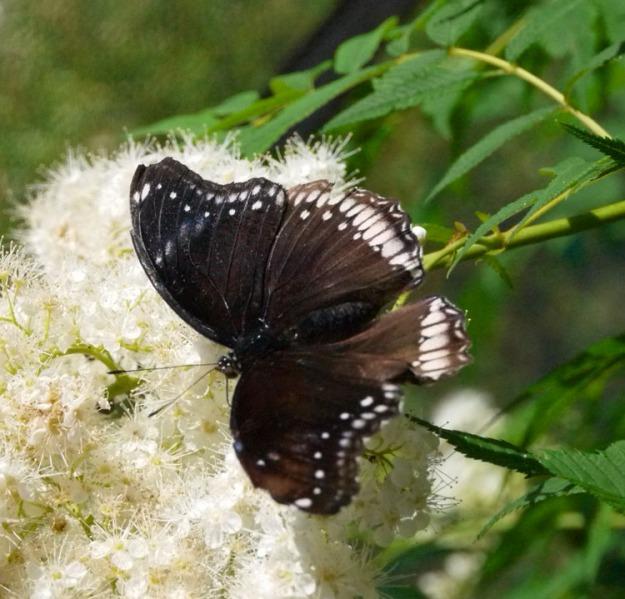 blooms butterflies 879