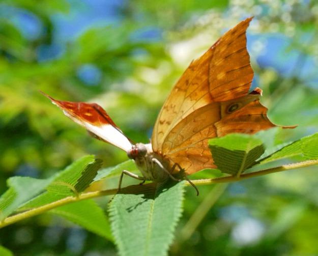 blooms butterflies 880