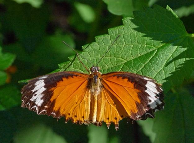 blooms butterflies 881