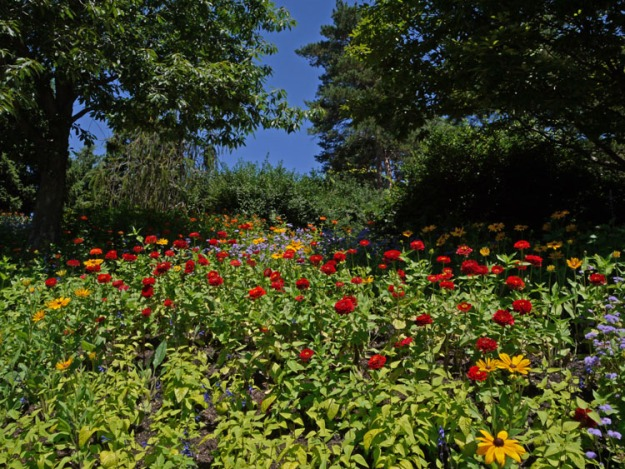hillside garden 021