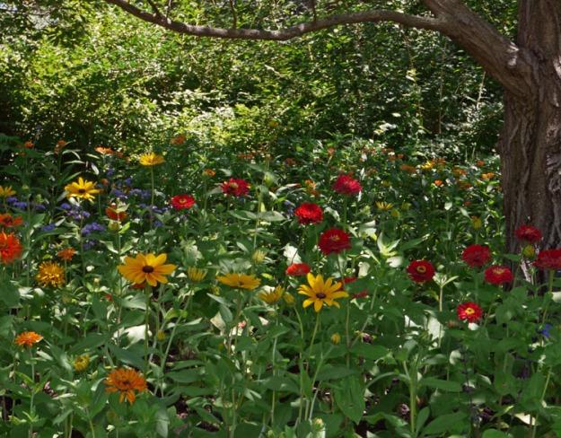 hillside garden 025