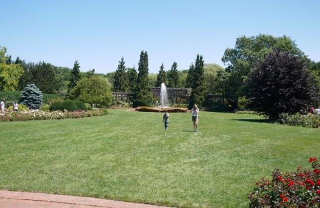 rose garden 919