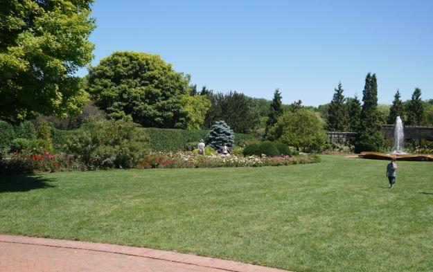 rose garden 920