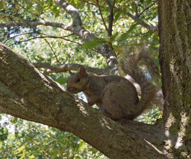 squirrel 035
