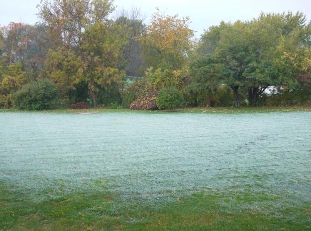 frost-backyard-179