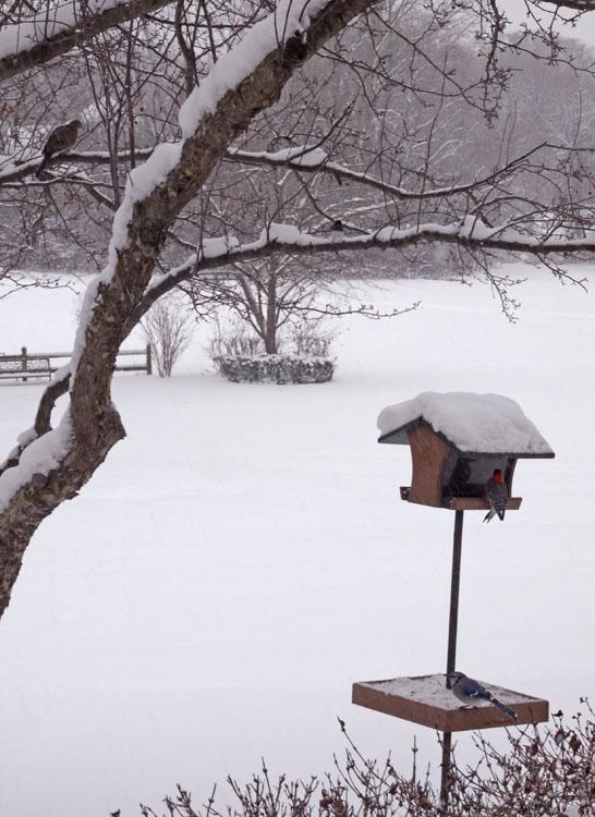 bird-feeder-462