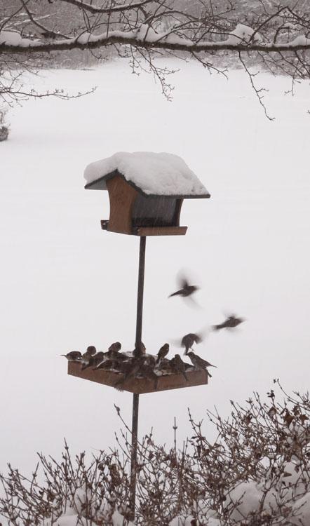 bird-feeder-468