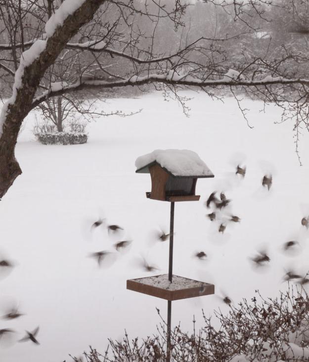 bird-feeder-476