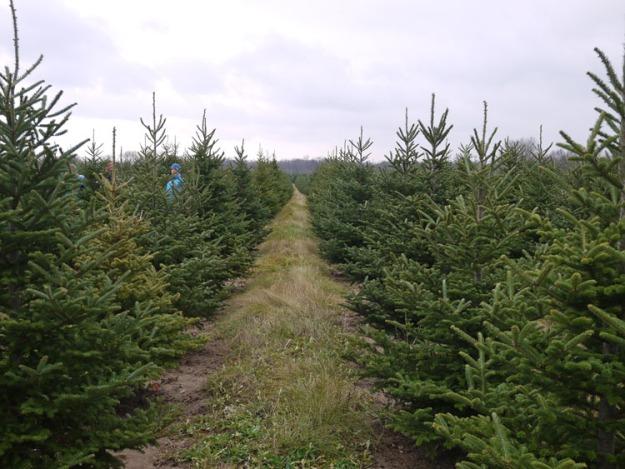 tree-farm-019