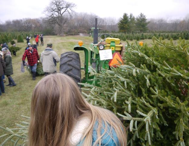tree-farm-049