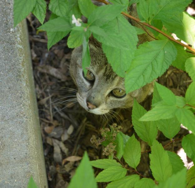 kitty 425