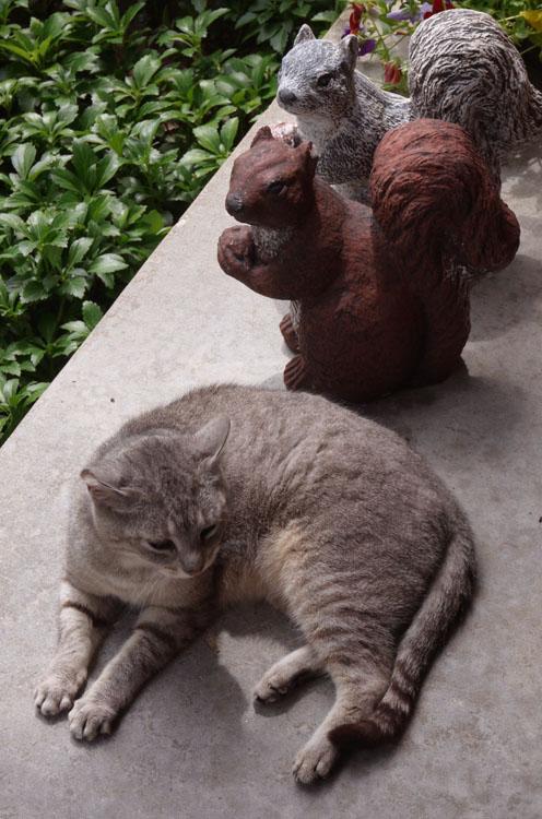 kitty 575