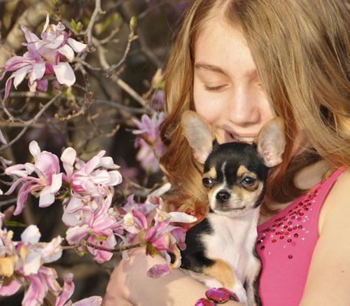 magnolias chi 8239