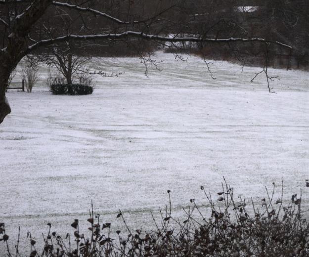 snowy morning 358