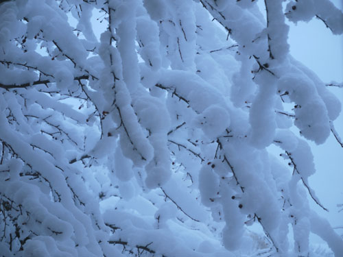 snow 552