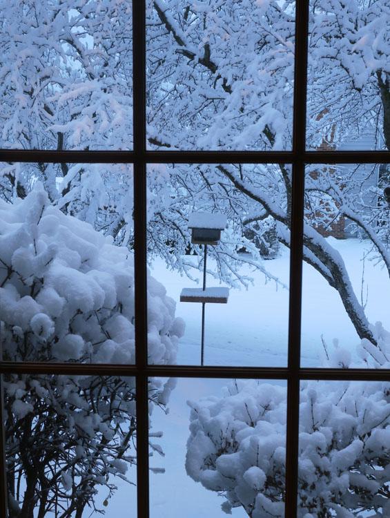 snow bird feeder 545