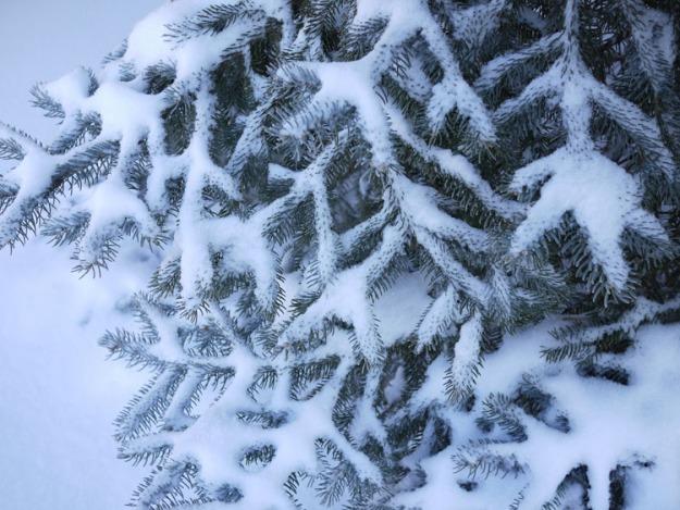 february snow 664