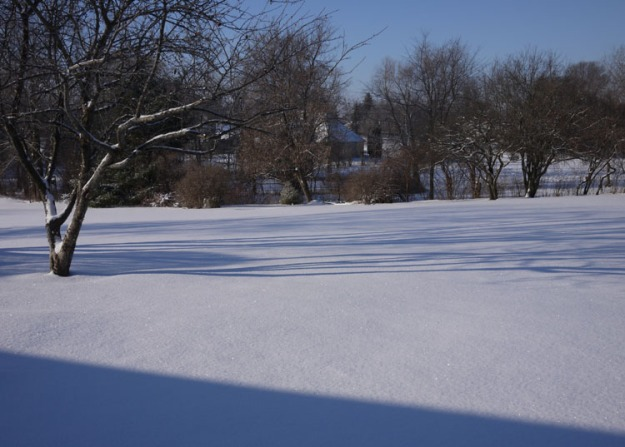 february snow 665