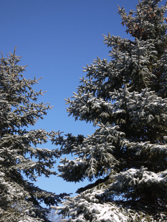 february snow 668