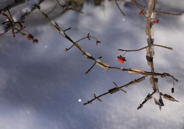 february snow berries 672