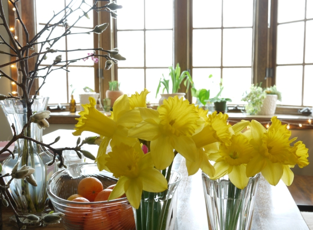 daffodils 2019 354