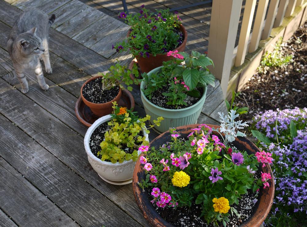2019 deck planters kitty 525