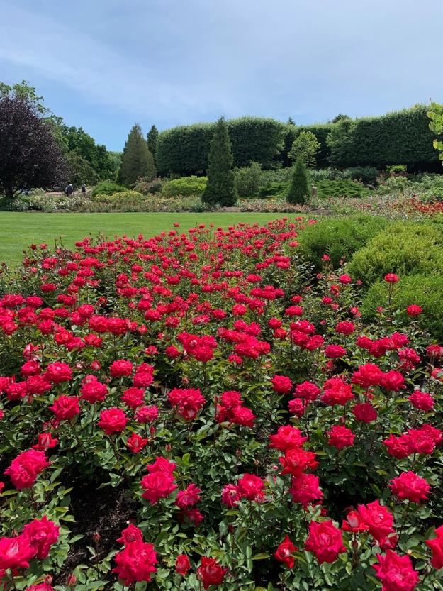 2019 rose garden 4380