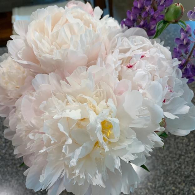 peony bouquet 4326