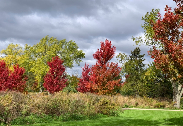 2019 fall hastings forest preserve 4672