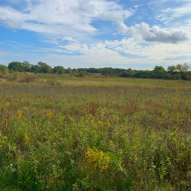 2019 forest preserve 4624